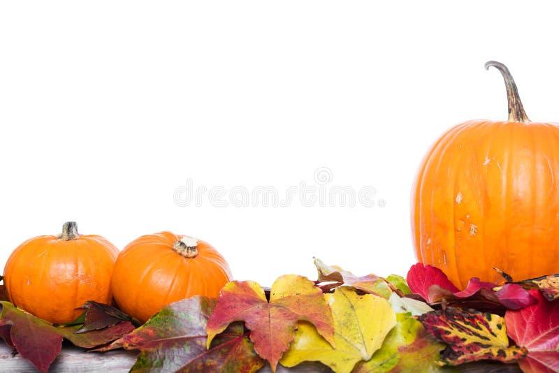 Herbstdekoration, -kürbise und -blätter lizenzfreies stockbild