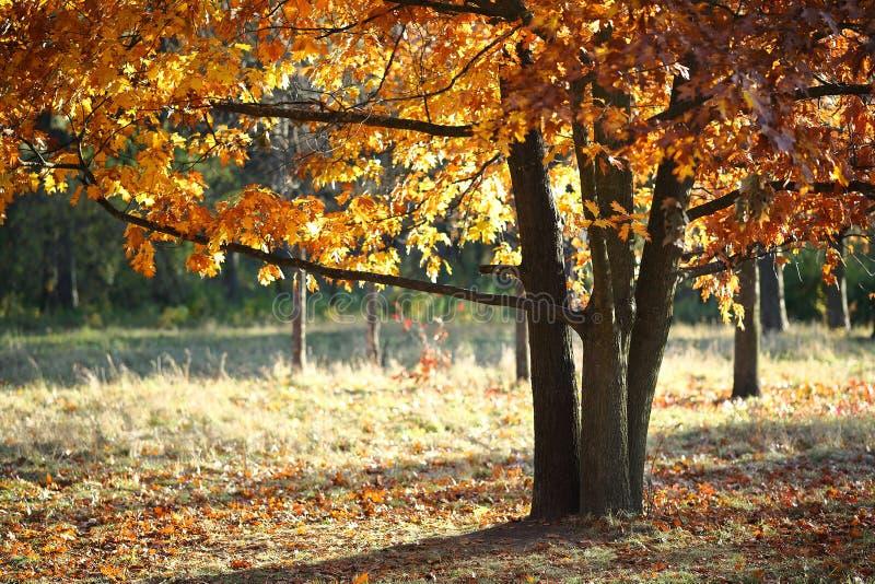 Herbsteiche auf einer Lichtung stockfotos