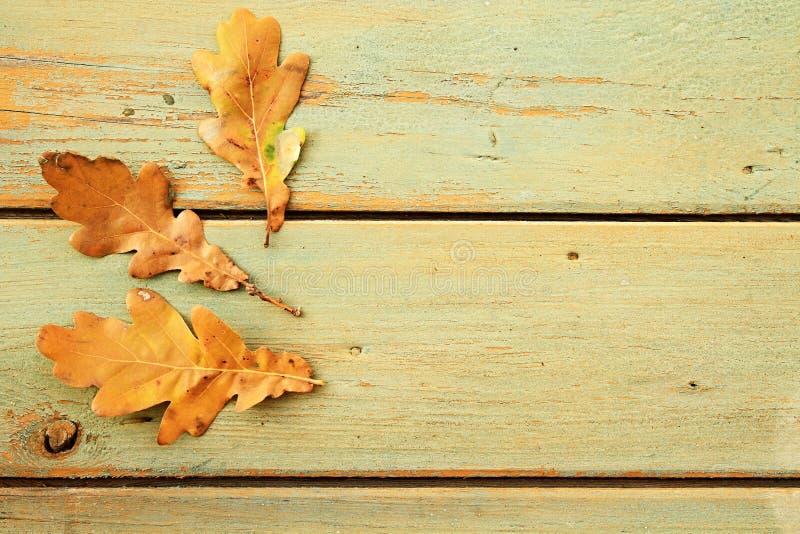 Herbsteichenblätter auf einer rustikalen Tabelle lizenzfreie stockbilder