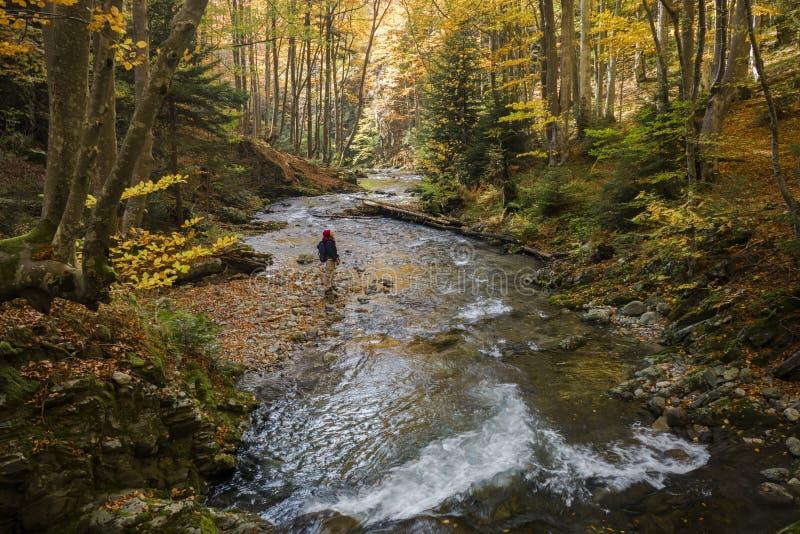 Herbsterforschung lizenzfreies stockfoto