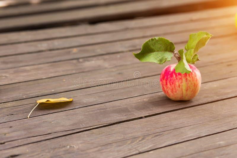 Herbsternte eine rotes reifes Apple mit gelbem Blatt stockbild