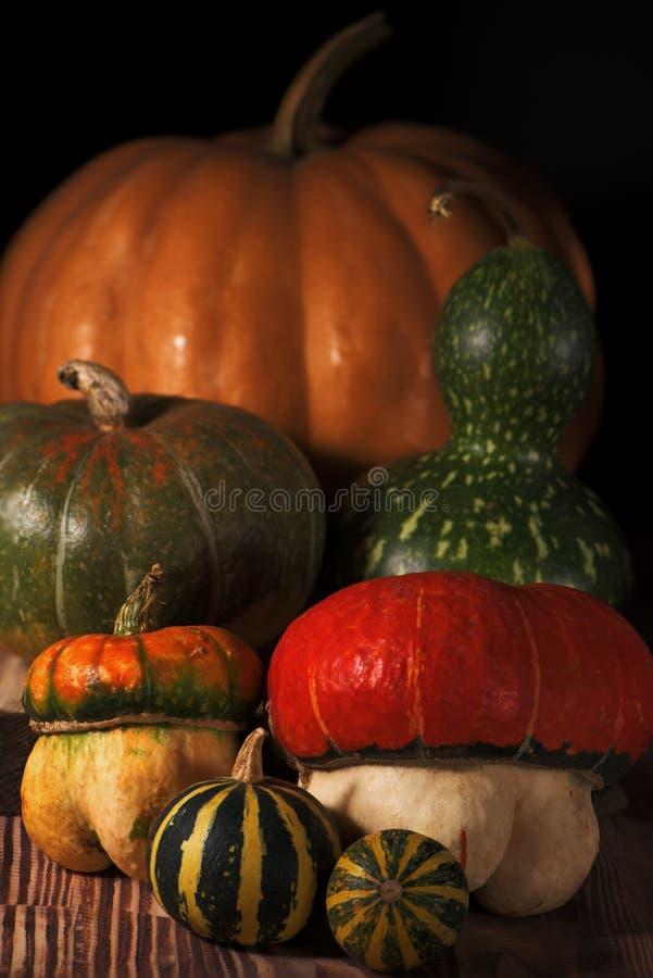 Herbsterntestillleben im vilage Eine Gruppe verschiedene Arten von Kürbisen stockfotos