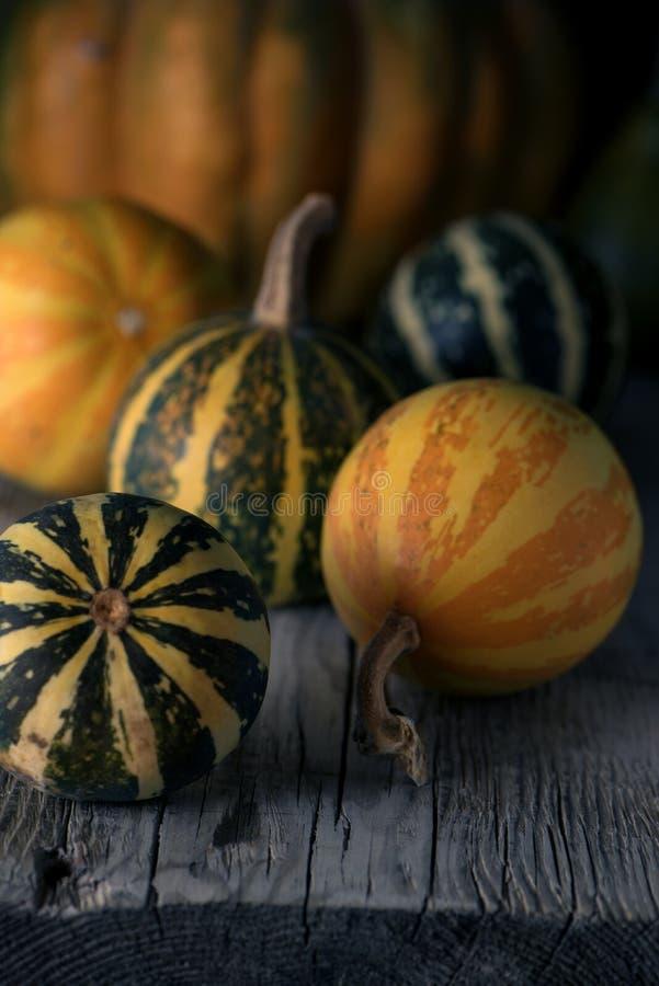 Herbsterntestillleben im vilage Nahe Ansicht von verschiedenen Arten von pumpkins2 stockbild