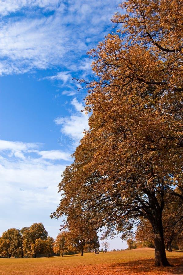 Herbsterwachen 2 fotografía de archivo