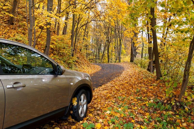 Herbstfahren stockbilder