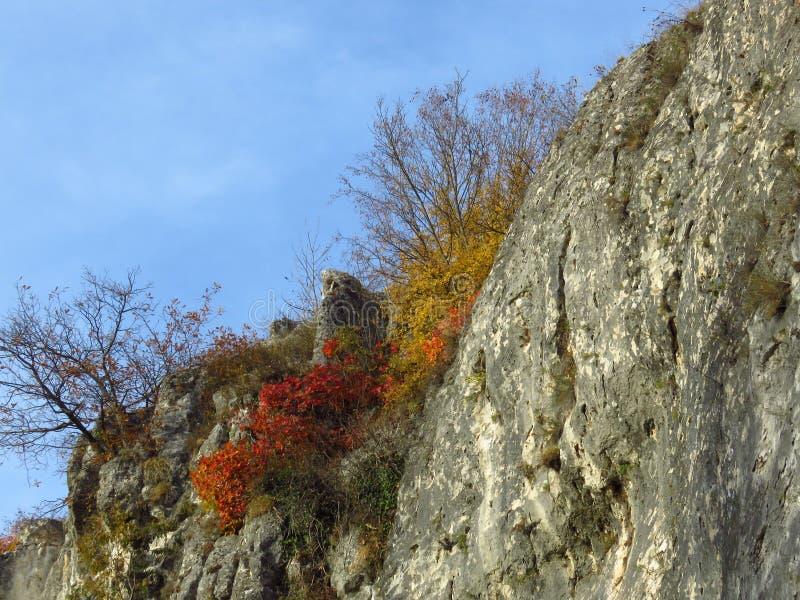 Herbstfall im Park Wald Farbige rote und gelbe Sträucher und Büsche und hellblauer Himmel Sonnenschein-Wettervorhersage lizenzfreie stockfotos