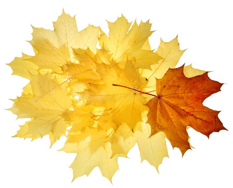 Herbstfallblätter