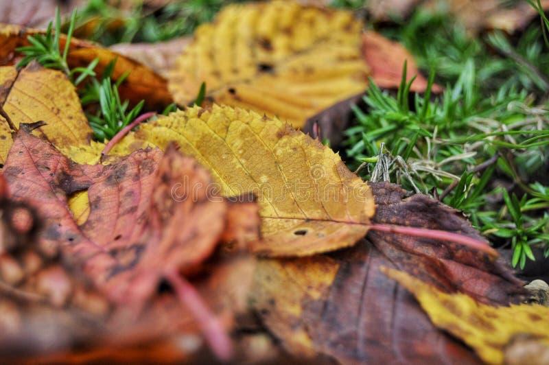 Herbstfallblätter auf dem Boden stockbilder