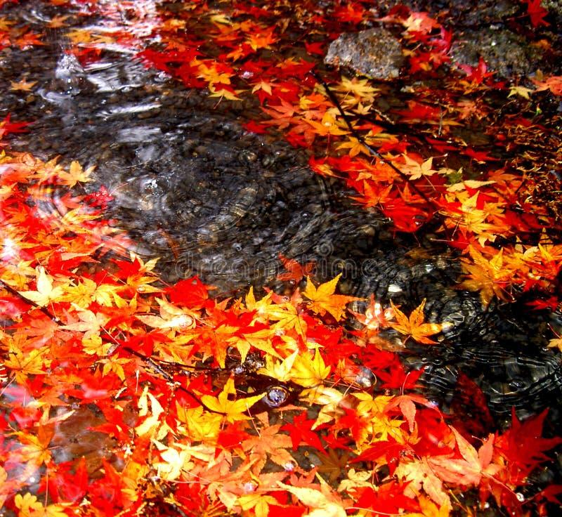 Herbstfallen stock abbildung