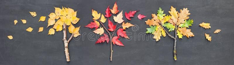 Herbstfallfahne Birke, Eiche und Ahornbaum hergestellt von den Zweigen, von den Stöcken und von gefallenen Blättern auf Tafelhint stockfoto