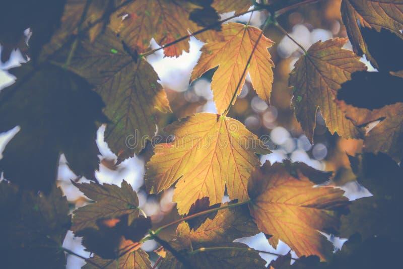 Herbstfarbblätter auf unscharfem Hintergrund stockbild