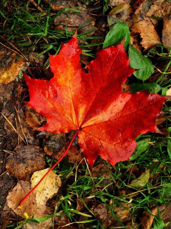 Herbstfarbe stockbild