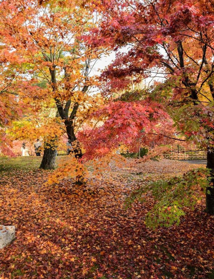 Herbstfarbe verlässt an Tofukuji-Tempel in Kyoto, Japan stockfotografie