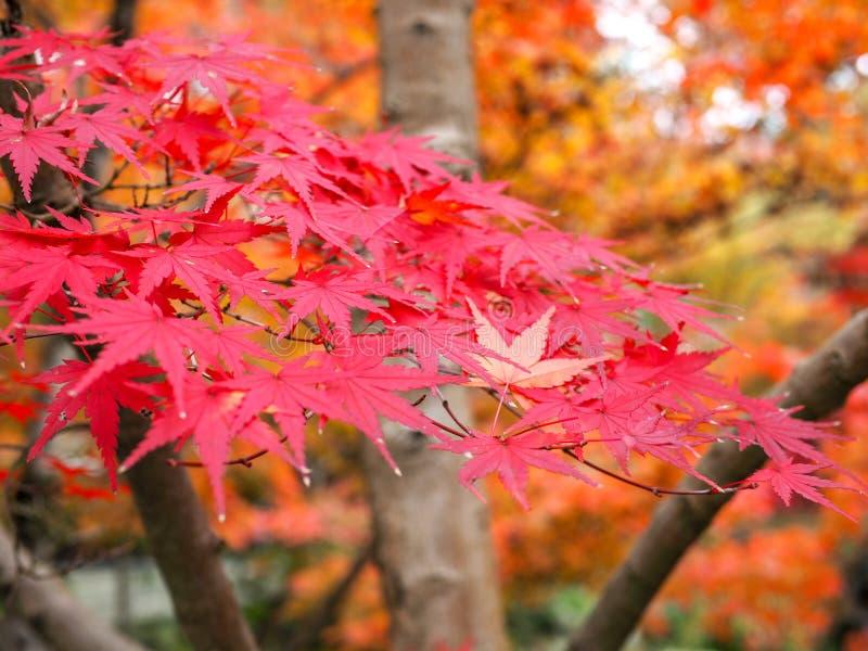 Herbstfarben 9 stockbild