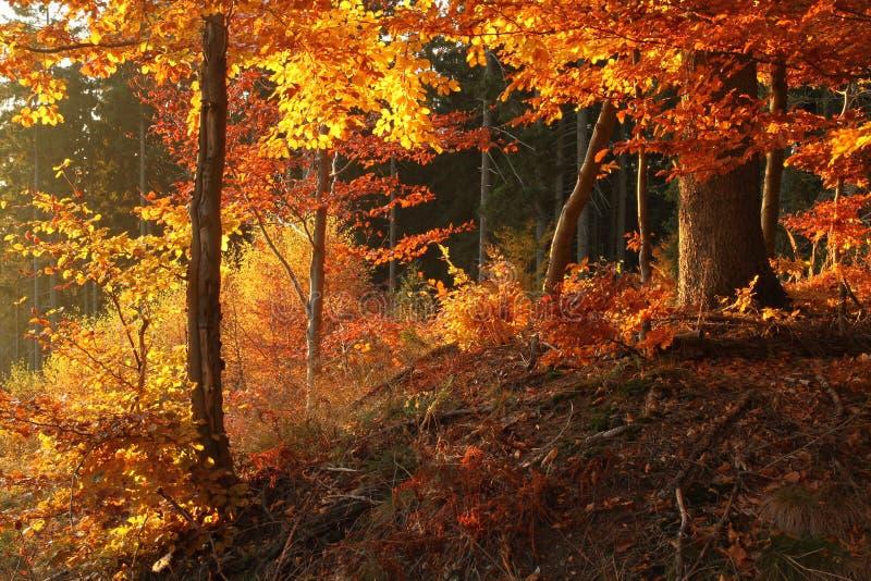 Download Herbstfarben stockfoto. Bild von protokoll, betrieb, buche - 27727690