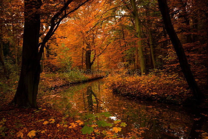 Herbstfarben stockfotos
