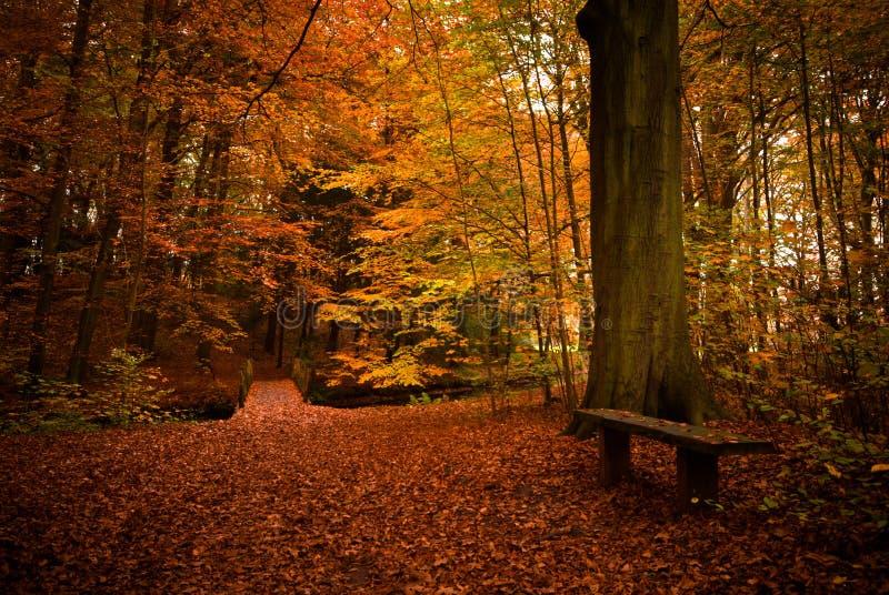 Herbstfarben lizenzfreie stockfotos