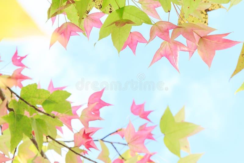 Herbstfarben 9 stockbilder