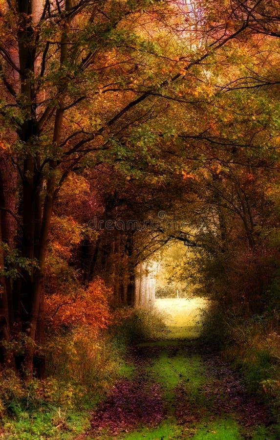 Herbstfarben. lizenzfreies stockbild
