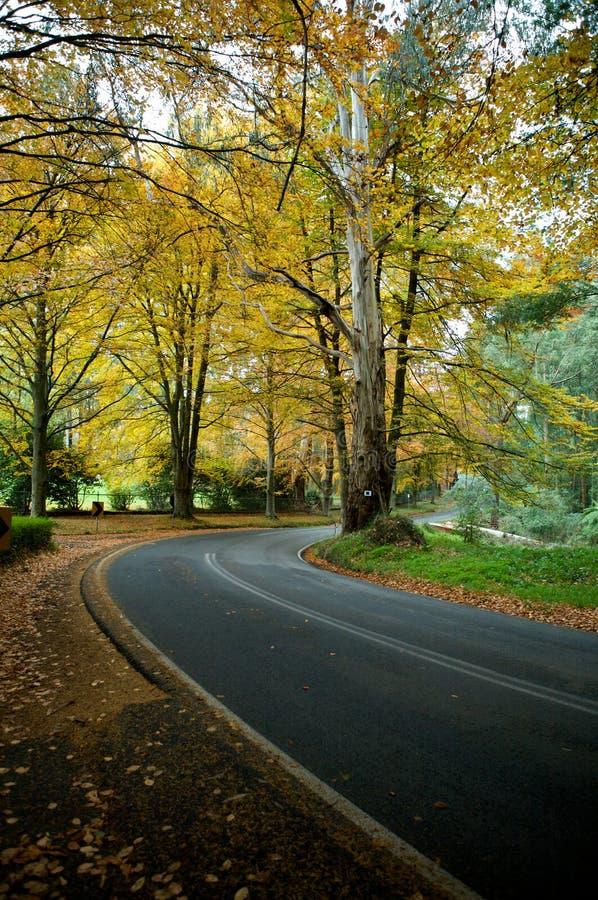 Herbstfarben auf einer Reisestraße lizenzfreie stockfotos