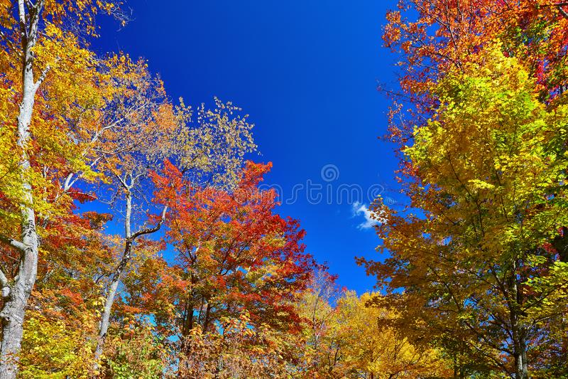 Herbstfarben in den Allegheny-Hochländern nahe Seneca Rocks, West Virginia stockfotos