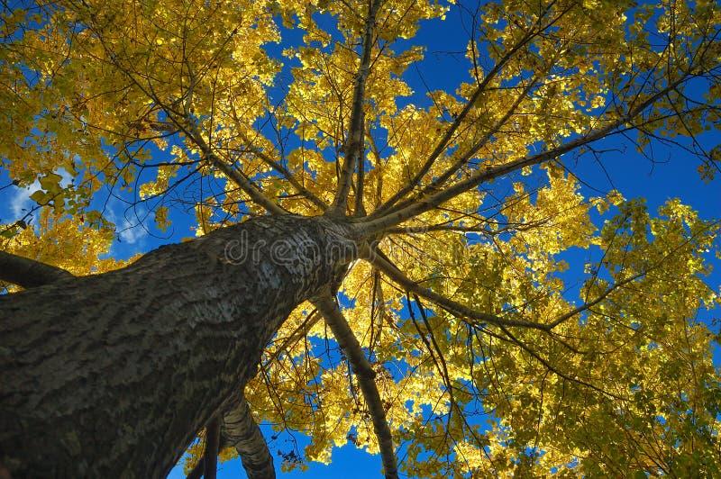 Herbstfarben in den Bäumen lizenzfreie stockbilder