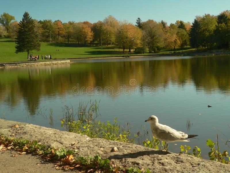 Herbstfarben, die über einen See nachdenken lizenzfreie stockfotos