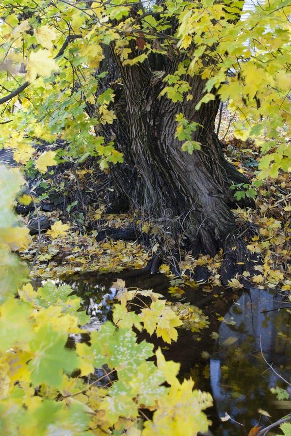 Herbstfarben durch einen Strom. stockfotografie