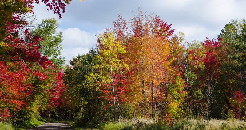 Herbstfarben entlang einem Schotterweg lizenzfreies stockfoto