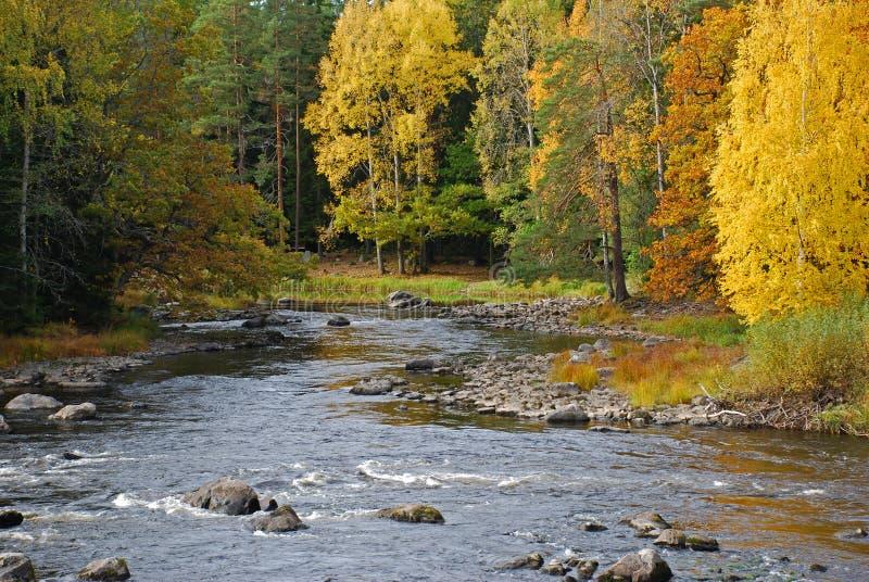 Herbstfarben entlang Fluss stockbild