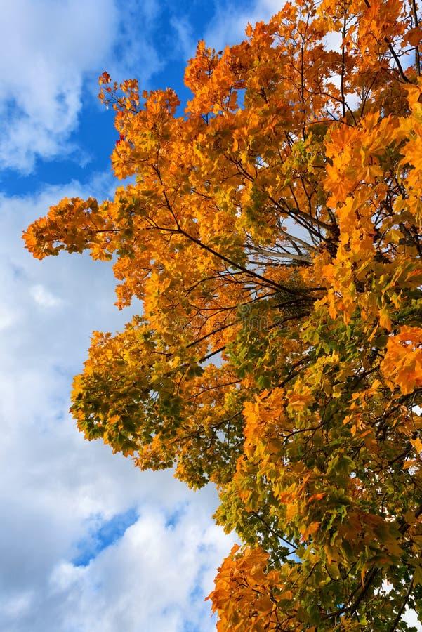 Herbstfarben, Fallhintergrund lizenzfreie stockbilder