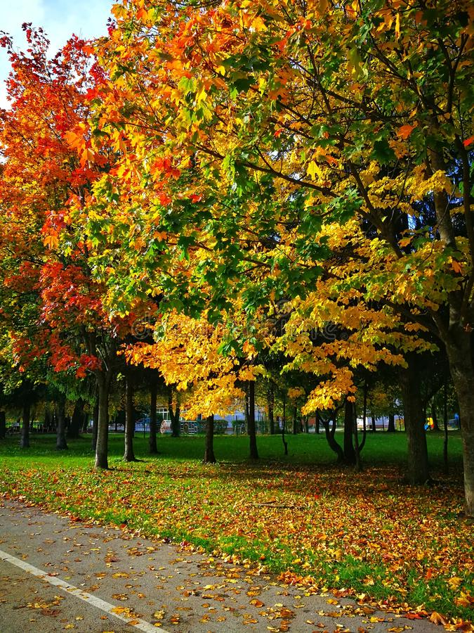 Herbstfarben, Gelbgrünrotblätter Fall, sonniger Tag lizenzfreies stockfoto