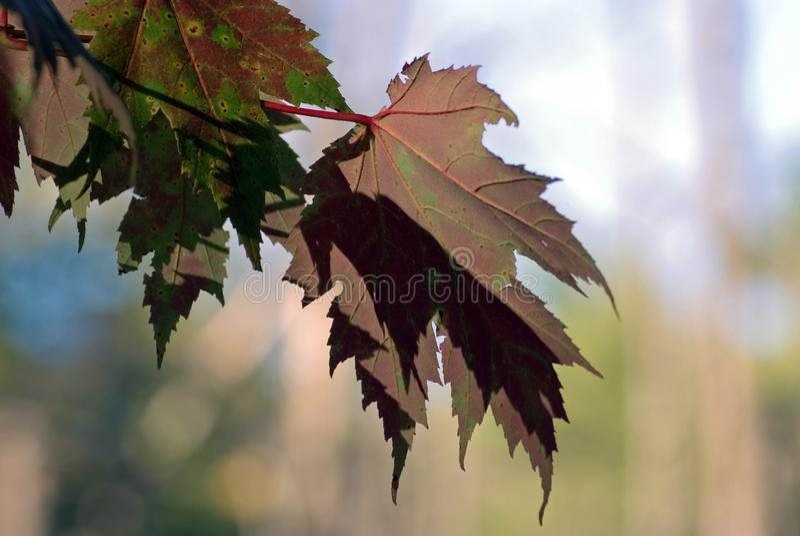 Herbstfarben 9 stockfoto