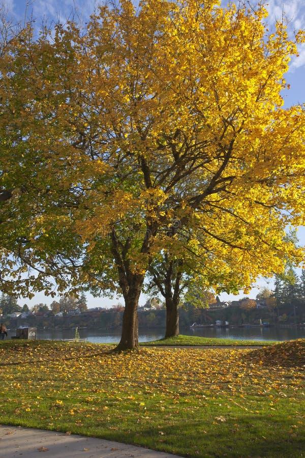 Herbstfarben im blauen Seepark Oregon lizenzfreie stockfotos
