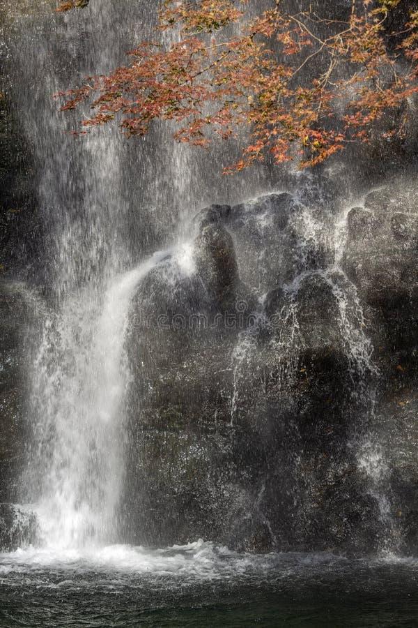 Herbstfarben im Minoo Forested Park und Wasserfall, einem natürlichen Erholungsgebiet in der Vorstadt Osaka, Japan lizenzfreie stockfotografie