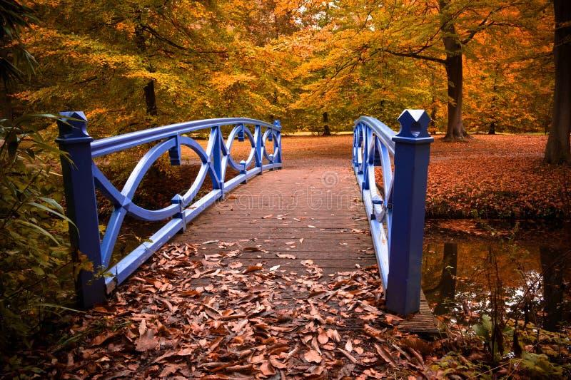 Herbstfarben im Wald stockfotos