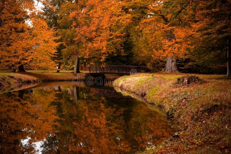 Herbstfarben im Wald lizenzfreie stockfotografie