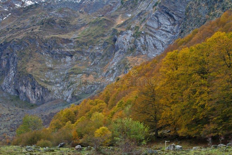 Herbstfarben im Wald stockbilder