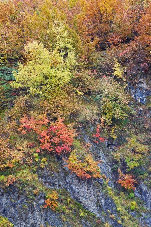 Herbstfarben im Wald stockfotografie