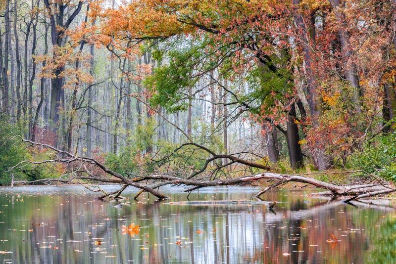 Herbstfarben im Fluss lizenzfreie stockfotografie
