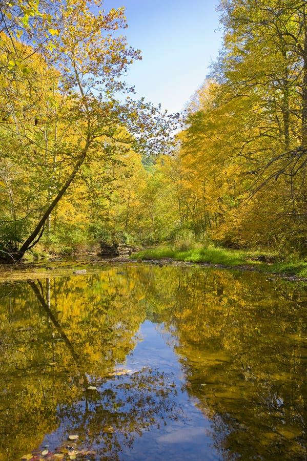 Herbstfarben reflektierten sich in einem Strom stockbild