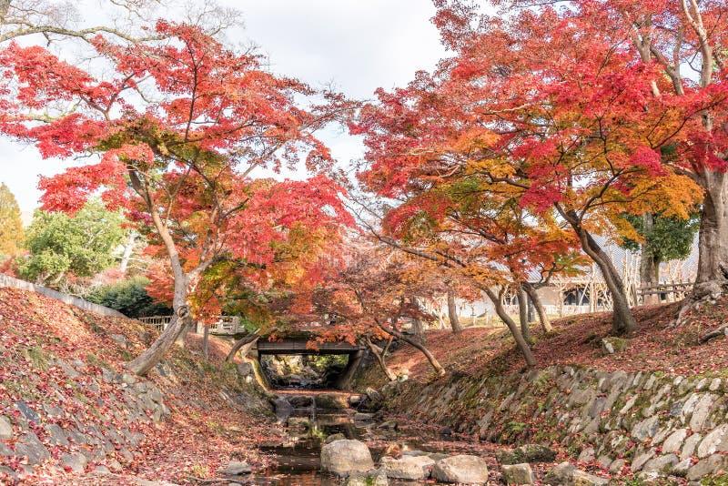 Herbstfarben von Blättern von Bäumen über kleinem Strom stockfoto