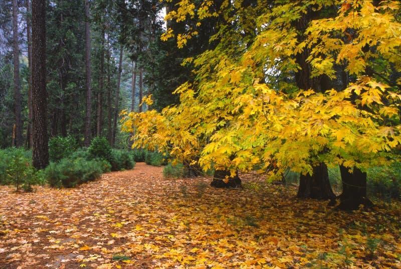 Herbstfarben in Yosemite stockfoto