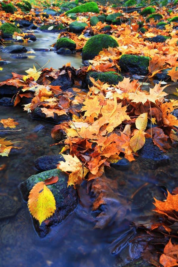 Herbstfarbenfluß lizenzfreies stockfoto