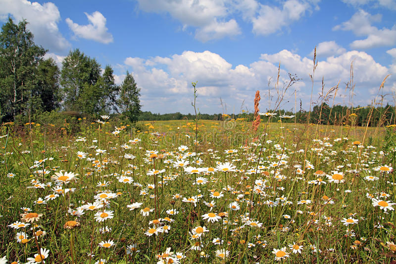 Herbstfeld stockfotos
