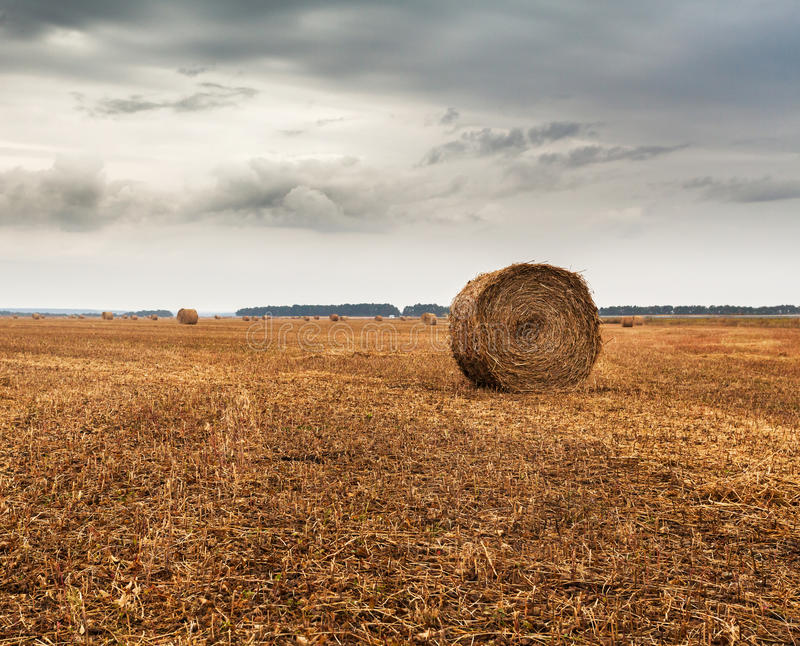 Herbstfeld mit Garben des Heus und des drastischen Himmels lizenzfreie stockfotos