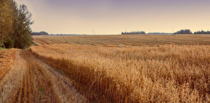 Herbstfeld nach schönem Sonnenunterganghimmel der Ernte Ländlicher Landscap lizenzfreies stockbild