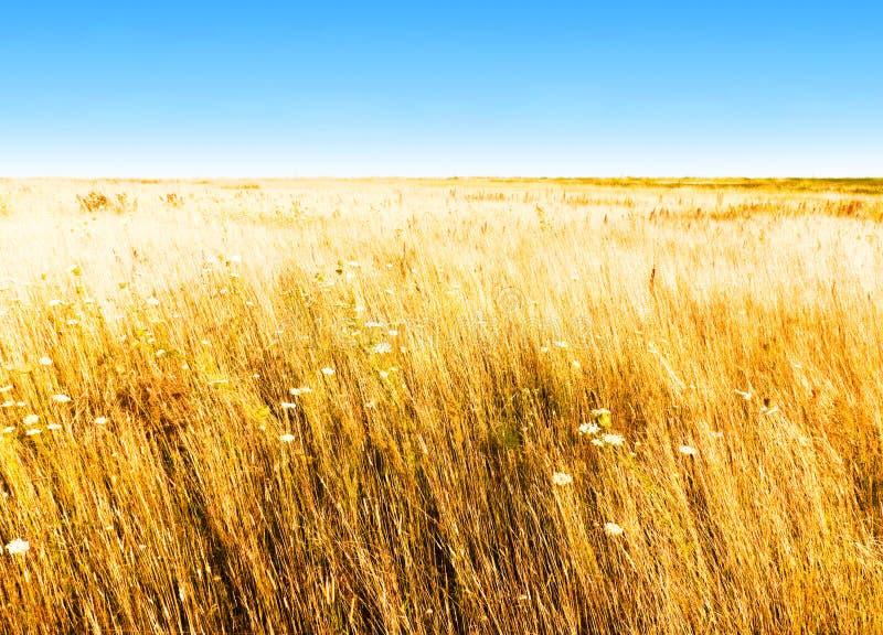 Herbstfeld und blauer Himmel stockfoto