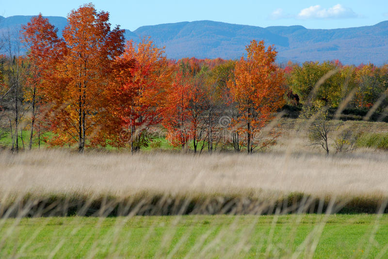 Herbstfeld Vermont lizenzfreie stockfotografie