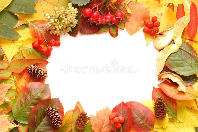 Herbstfeldhintergrund stockfotografie